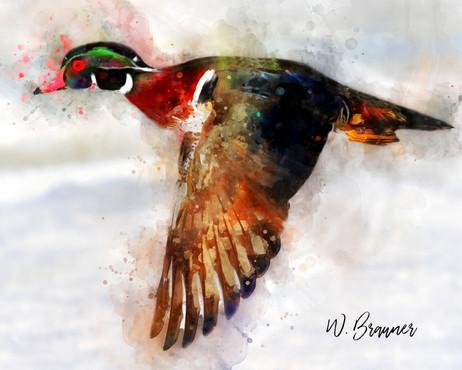 Flying Woodduck