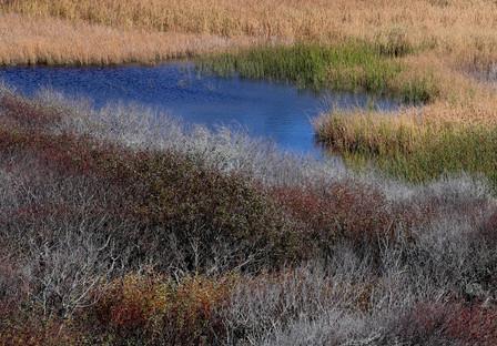 Marsh, Pescadero