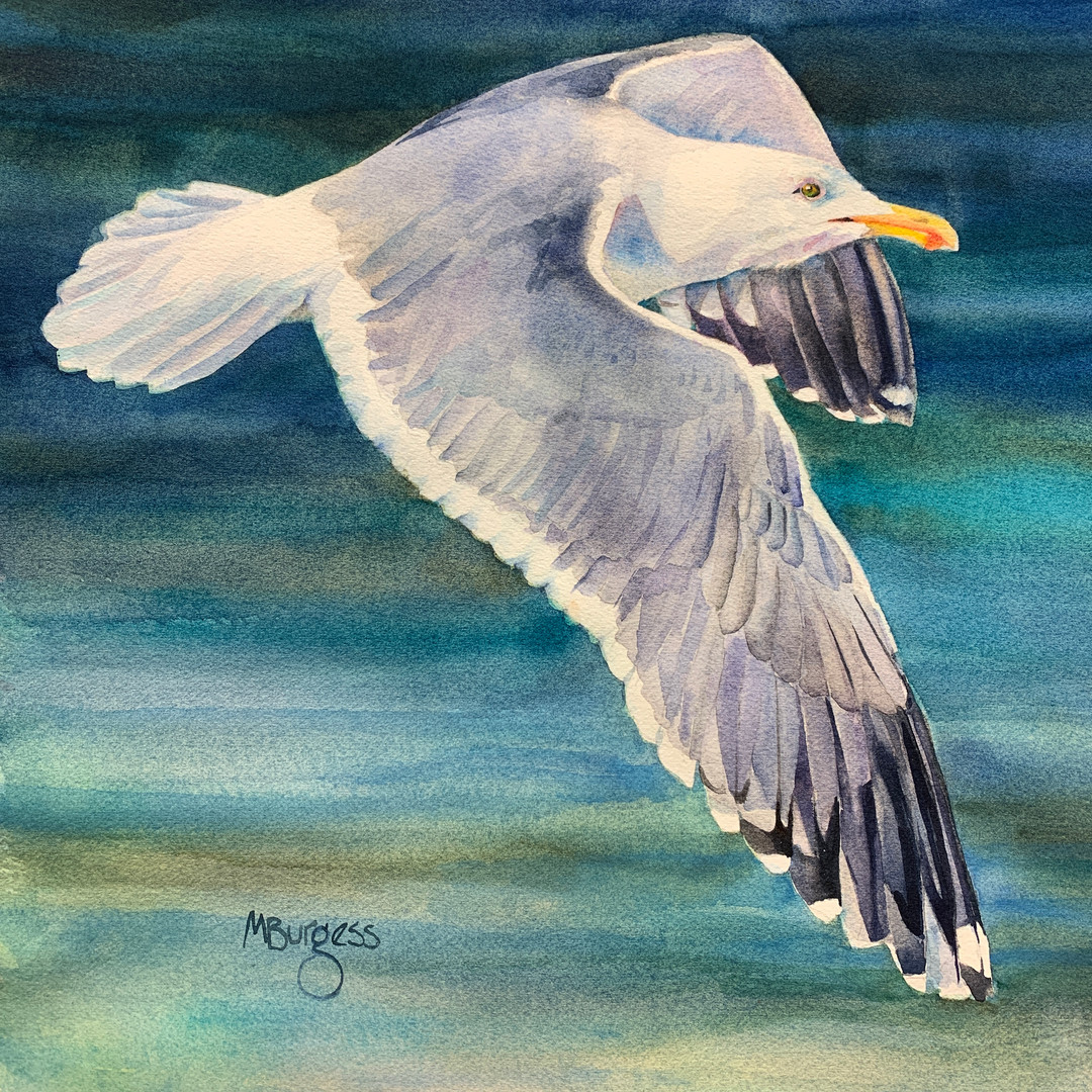 As the Gull Flies