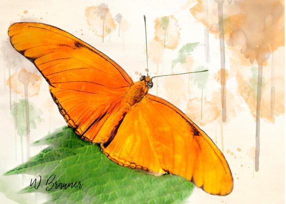 Orange Winged Butterfly