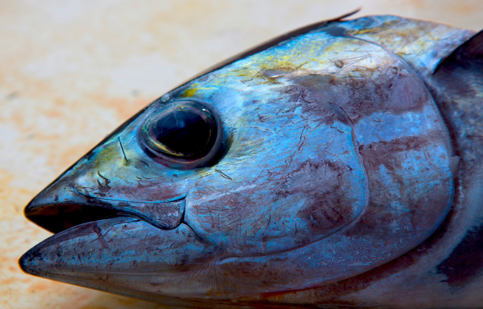 Bonito Gulf