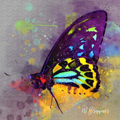 Purple Varigated Butterfly