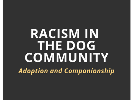 Racism in the Dog Community: Adoption and Companionship