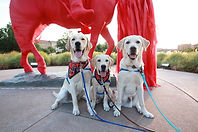 Three yellow labs sit in front of a red horse statue.