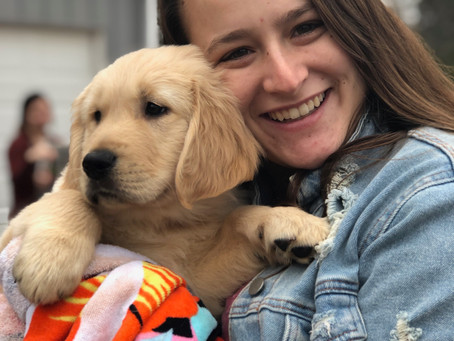 Choosing a Puppy Raising Organization/Local Group