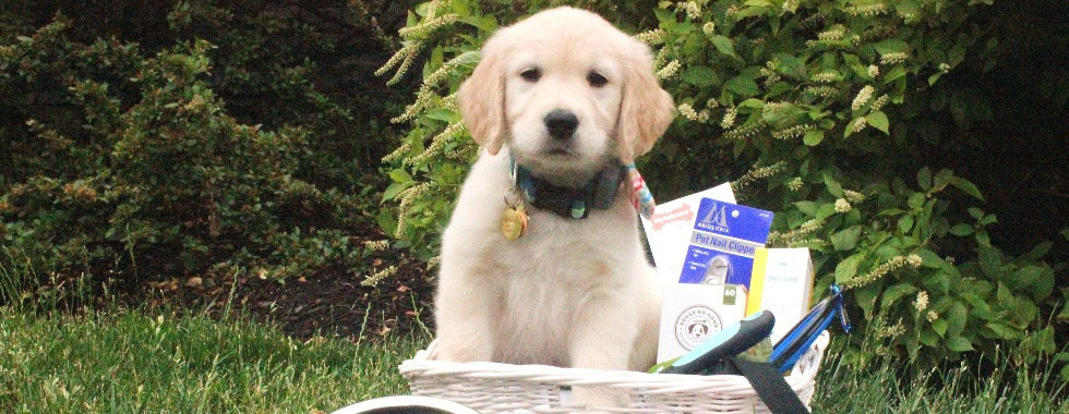 Essentials for First Time Puppy Raisers