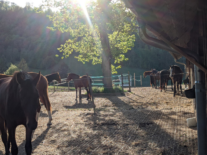 Pension jeunes chevaux