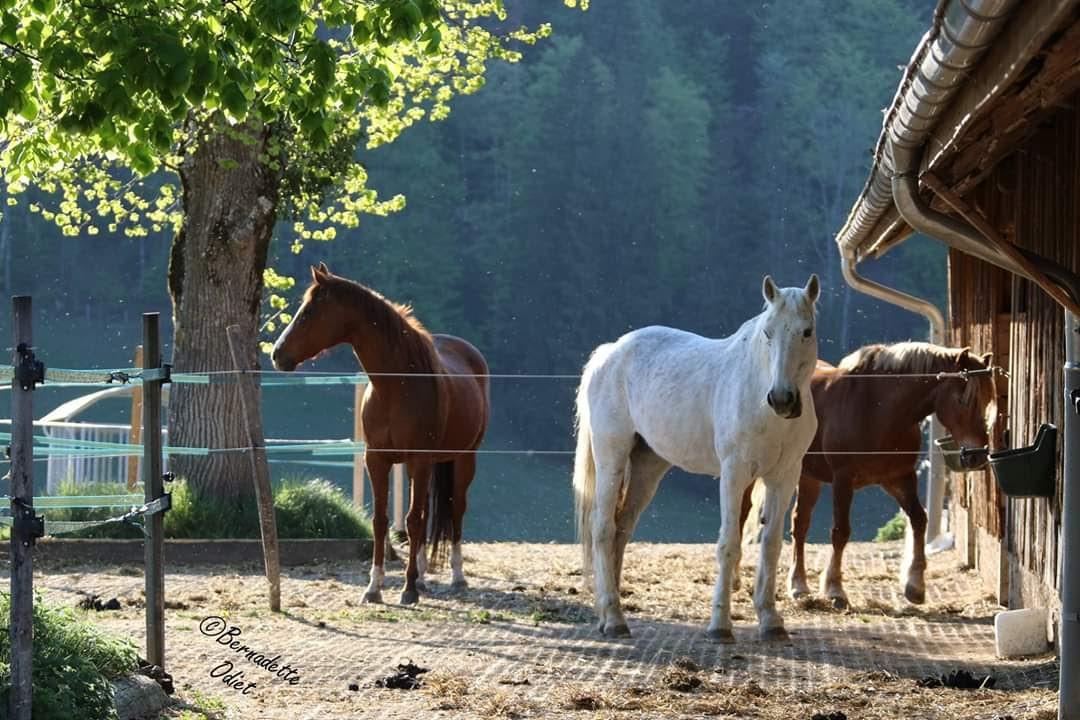 Pension chevaux retraite