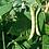 """Thumbnail: White Beans """"Arrocilla""""  - Baigorri"""