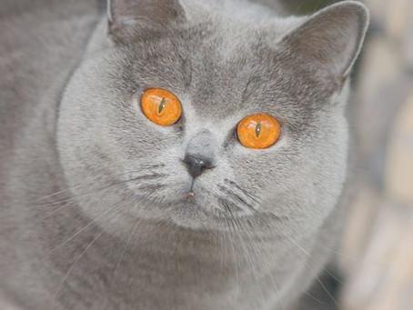 Catshow Turnhout