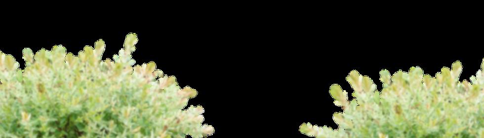 yellowbushniceblur.png