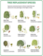 treeselection1.png