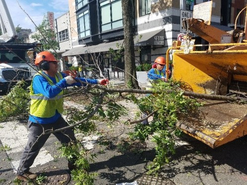Tree trimming crew mulching at R St