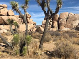 Cottonwood Campground at Joshua Tree SP, My Sister Joins us on our way to St. Louis