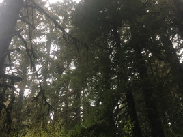 Umatilla Oregon