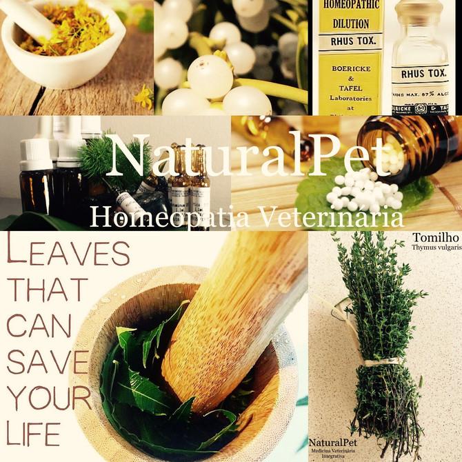 Homeopatia mais que uma paixão, uma filosofia de vida!!❤️🌿🐾🙌🏻