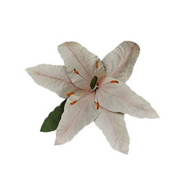 large lily cream-pink.png