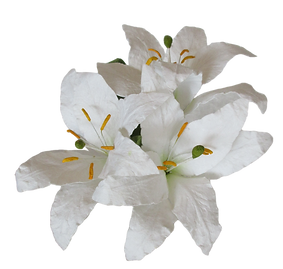 White Lilies.png