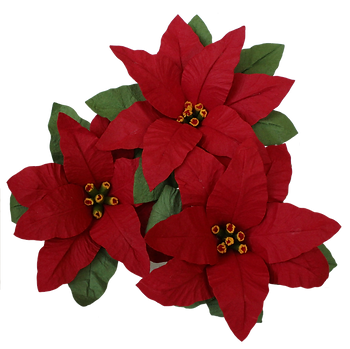 Poinsetia - three.png