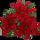 Thumbnail: Poinsettia Perfection