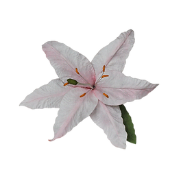 large lily white-pink.png