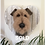 Thumbnail: Life size Welsh terrier head mounted on white washed wooden heart