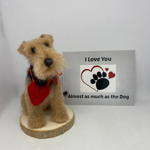 The Heart Stealer .... Airedale