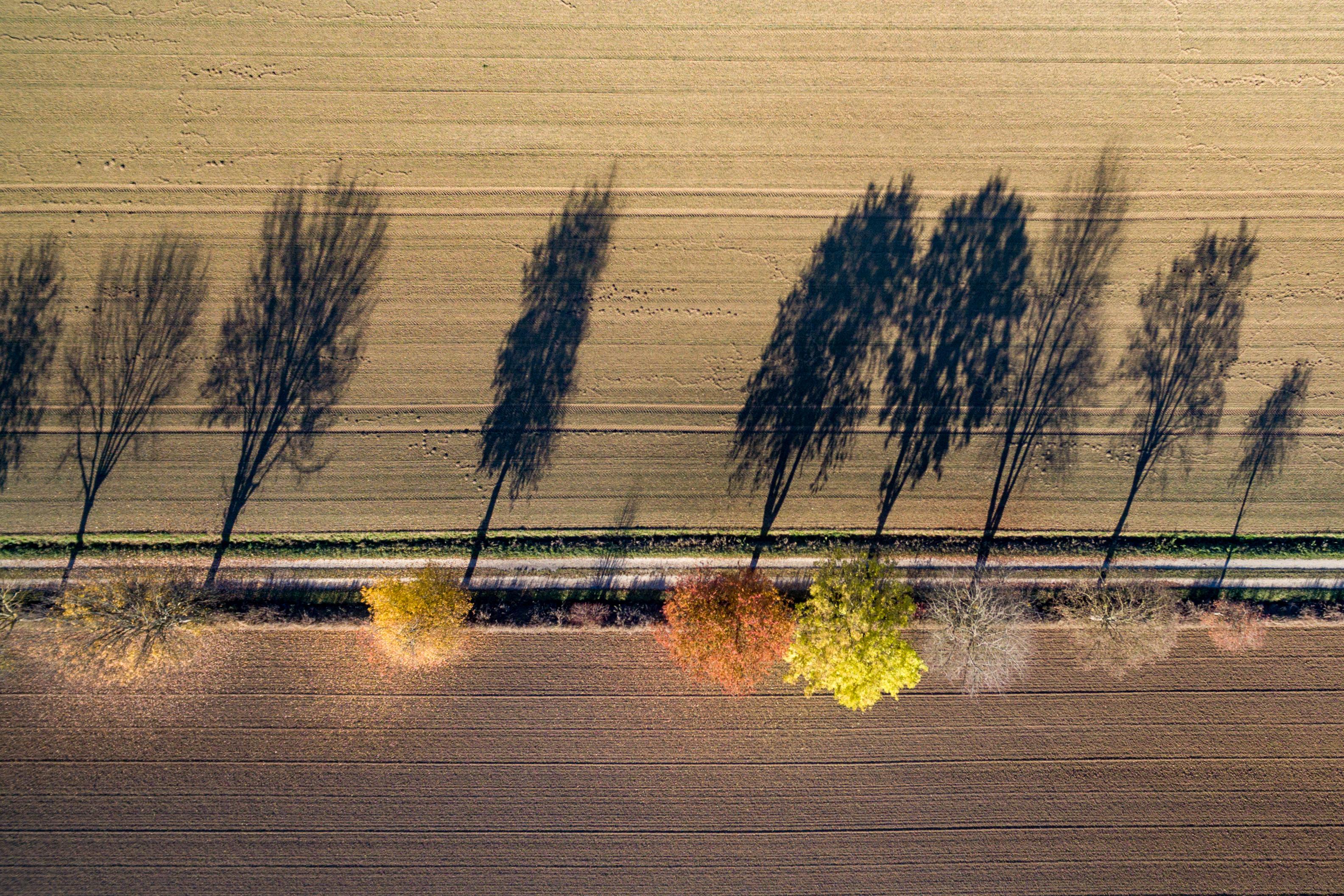 151102_Herbstbäume_Luftbilder_3921