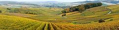 Vignes à l'automne en Champagne