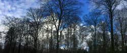 Forêt d'Eu - Hiver 2017