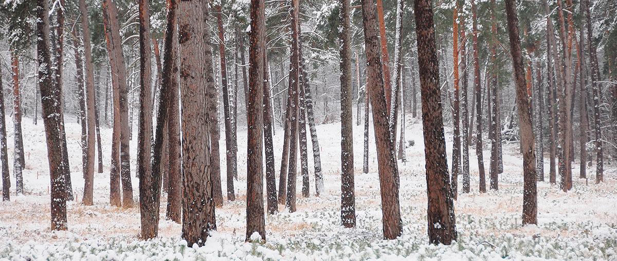 Forêt de Fontainebleau - Hiver 2009