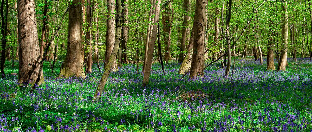 Forêt d'Eu - Avril 2016