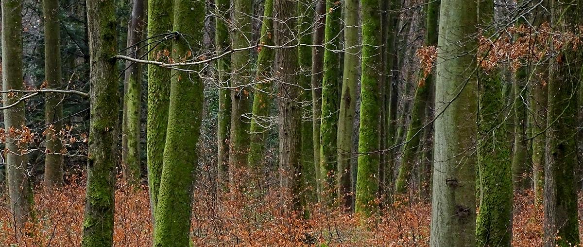 Forêt d'Eu - Automne 2016