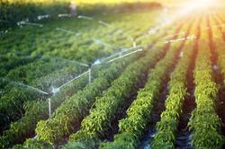 Sprinkler-irrigation