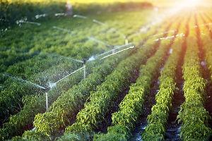 Sprinkler-irrigation.jpg