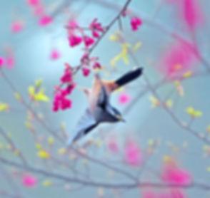 bird taiwan.jpg