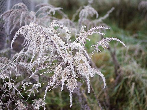 Tom Strudelhof | Winter 1