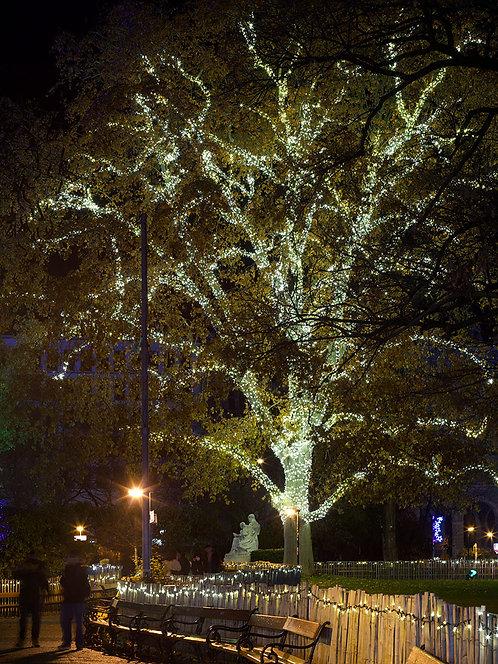 Tom Strudelhof | Christmas time in Vienna 3