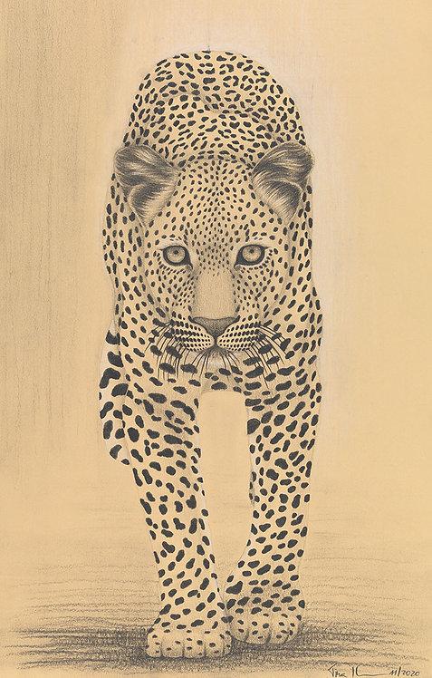 Tina Ibounig | Leopard