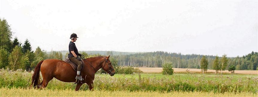 hevosia 16 (2).jpg