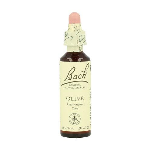 Olivo - Olive 20ml