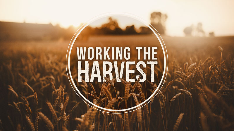 Working-the-Harvest-Main-Graphic-2017.jp