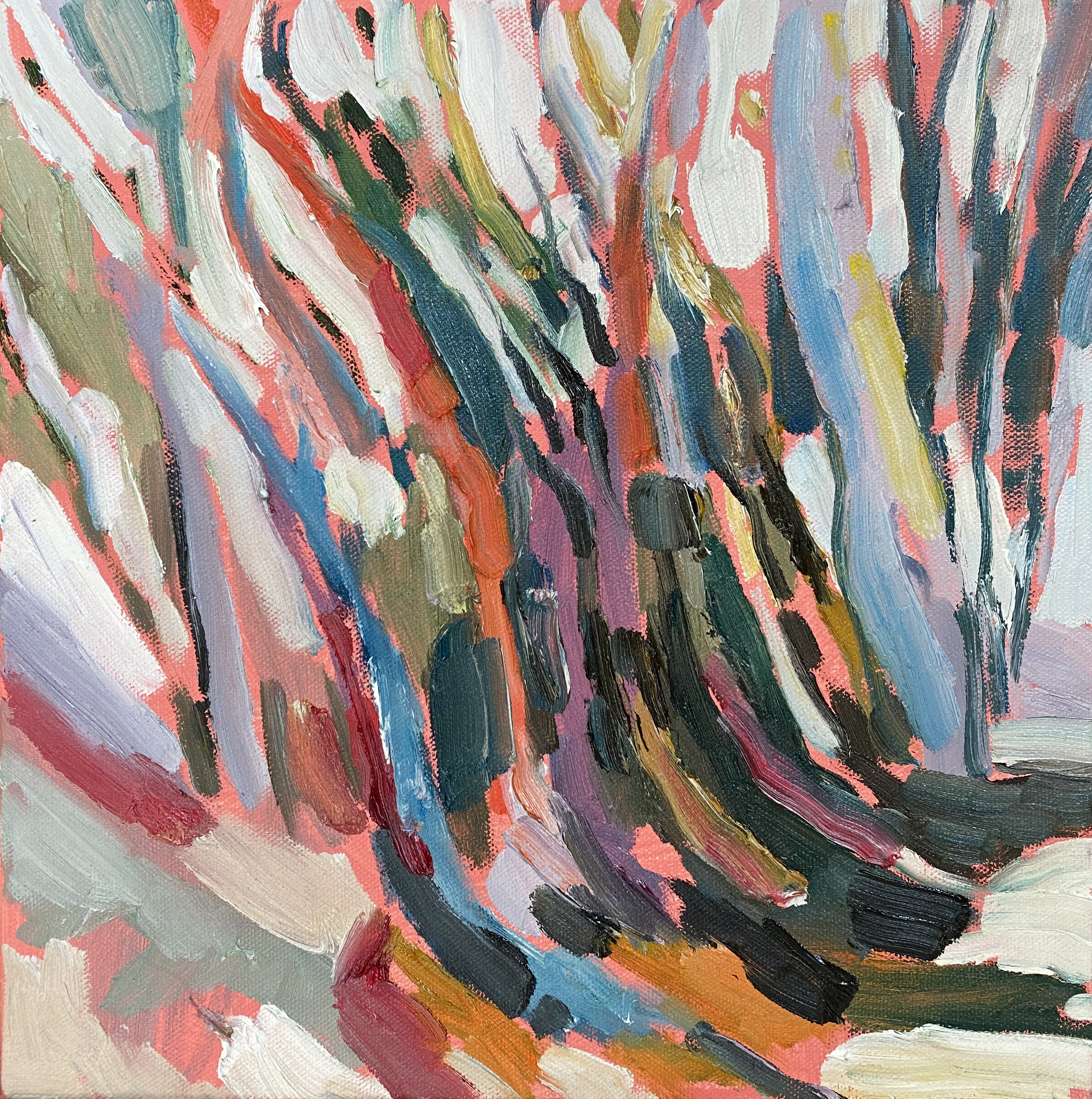 Trees in Leura