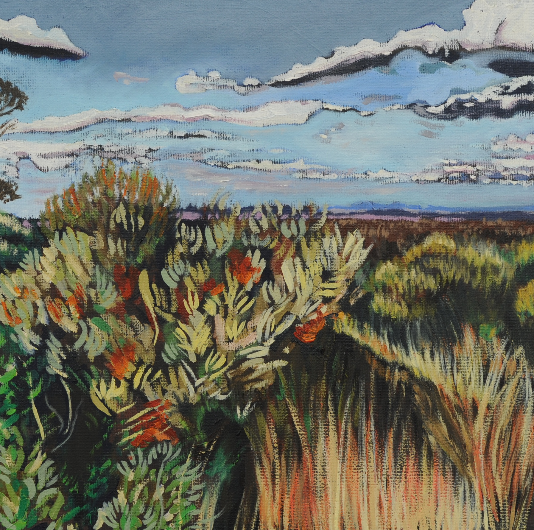 King's Tableland Banksia, 2015