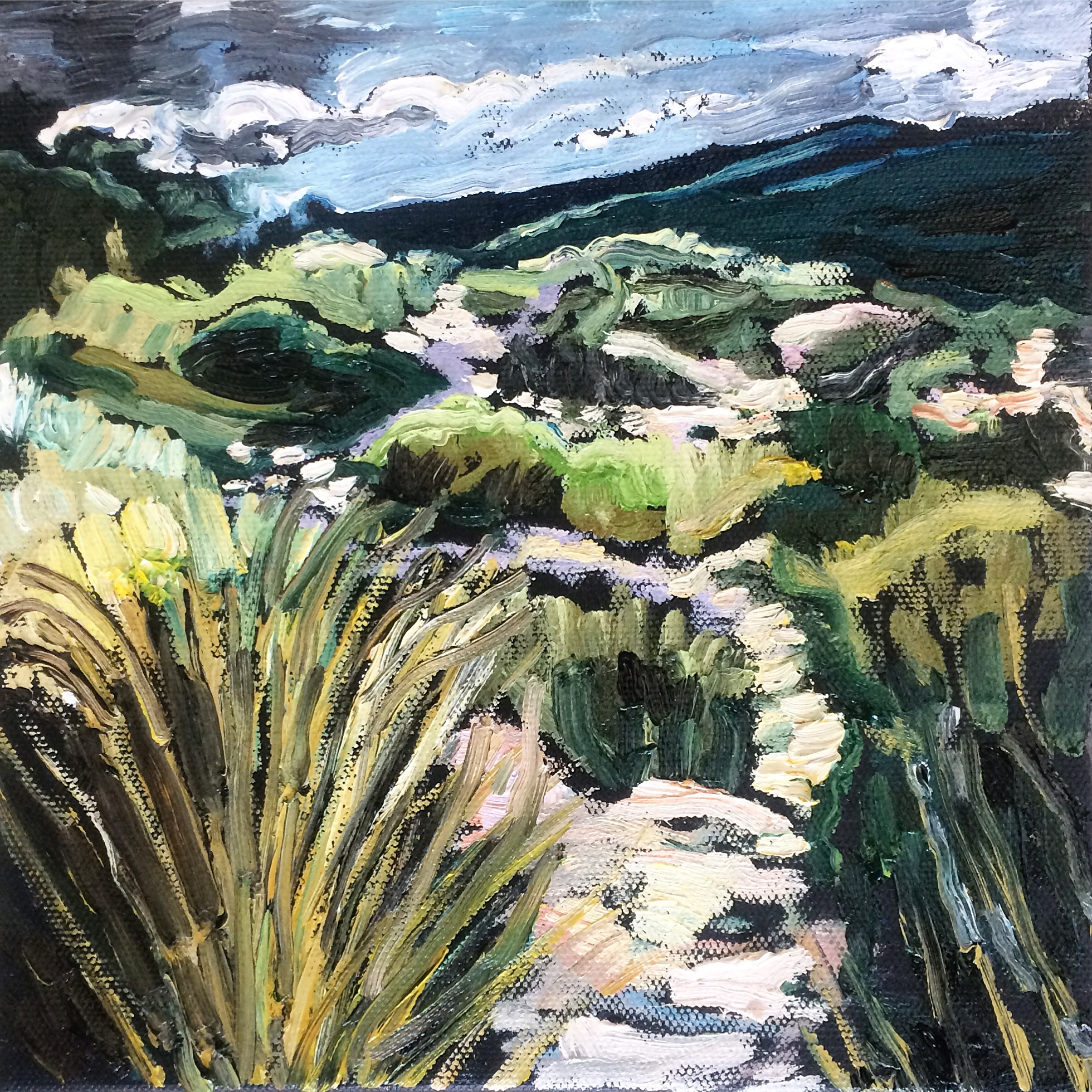 Mt Hay Path Study, 2016