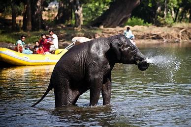 Dubare Elephant Camp.jpg