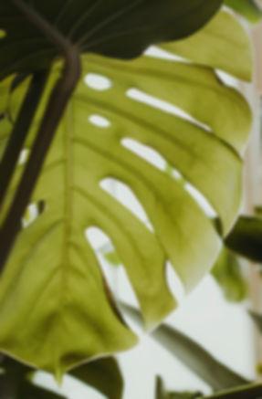liść, kwiat, fotograf warszawa