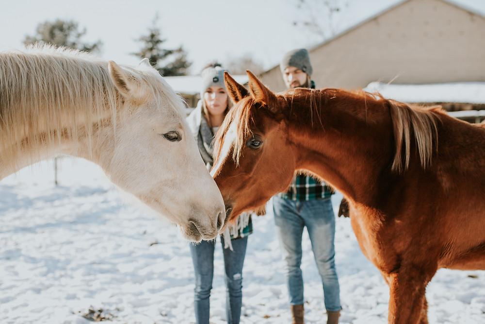 zimowa sesja, narzeczeńska zimowa sesja, fotograf warszawa, Puszcza Mariańska, sesja z koniem, sesja z końmi, zimowa sesja z koniem, zimowa sesja z końmi, sesja w stodole, rustykalna sesja, konie