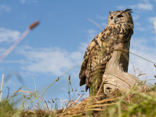British Wildlife Centre : Owl Photography Day