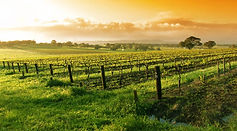 napa-valley-wine-tour.jpg